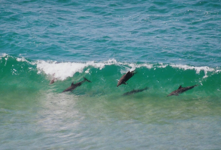 What a fabulous sight and we agree. #dolphins #Nambuccaheads #whitealbatross
