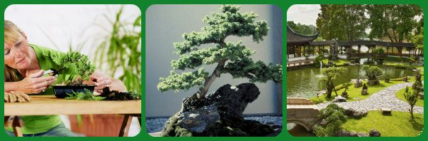 Landscape Equipment & Supplies - Grove Way Bonsai Nursery - Hayward - CA