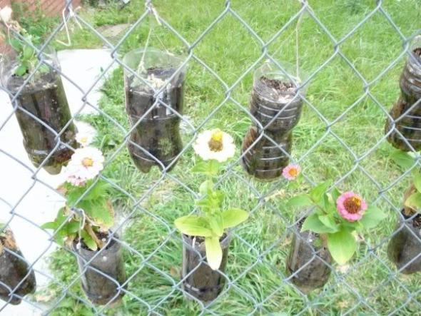 Chain link fence garden