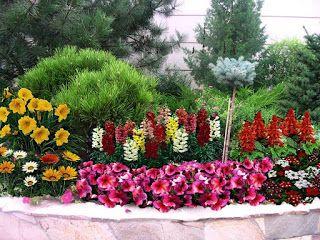 садовые цветы: СОЗДАЕМ КРАСИВУЮ КЛУМБУ