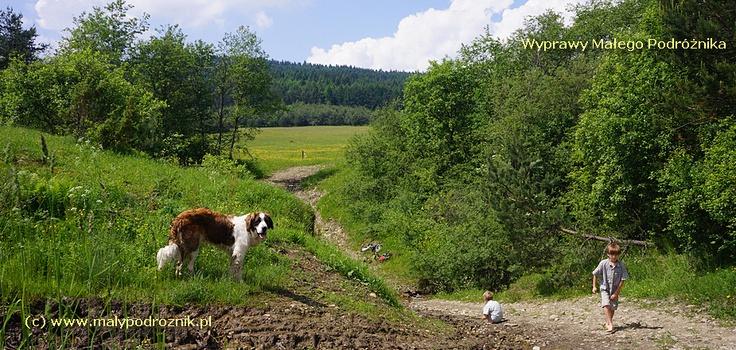 BESKID NISKI - droga przechodzi przez potok brodem.... Idealne miejsce do zabawy i odpoczynku na szlaku!