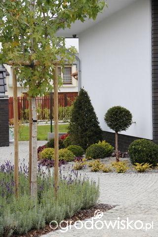 Ogród z lustrem - strona 200 - Forum ogrodnicze - Ogrodowisko