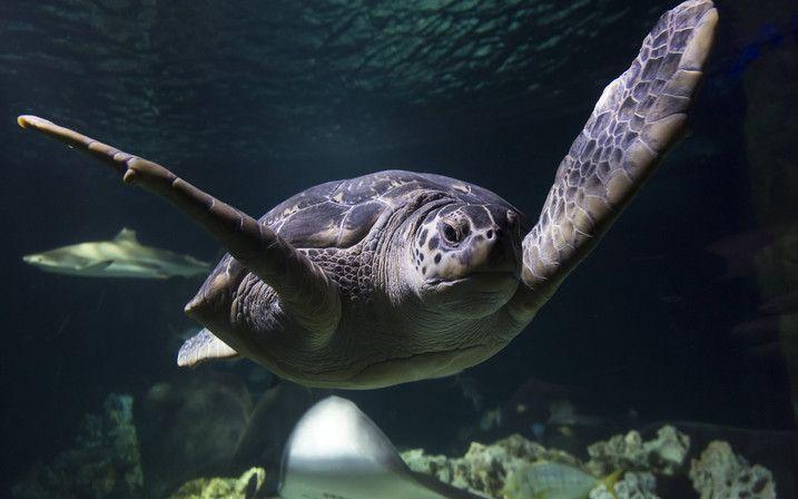 Sea Life Konstanz | Erwachsene (ab 15 Jahre): € 16,50, Kinder (3 - 14 Jahre): € 10,95 (falls das Wetter mal ganz, ganz schlecht sein sollte)