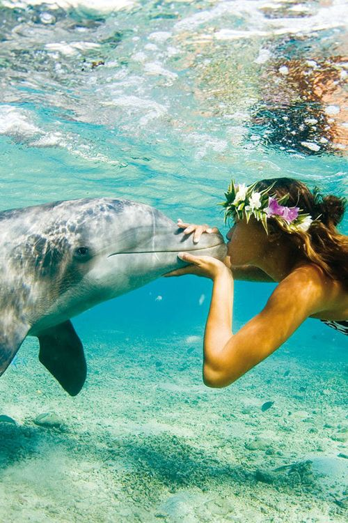 Raise your hand if you want to kiss a dolphin!