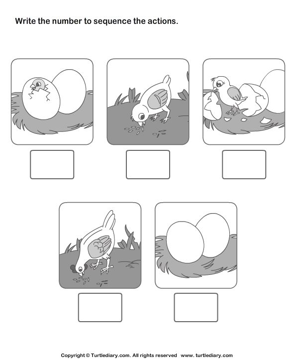 Download And Print Turtle Diary 39 S Picture Sequencing Birth Of A Chicken Worksheet Our La Sequencing Worksheets Sequencing Pictures Kindergarten Worksheets