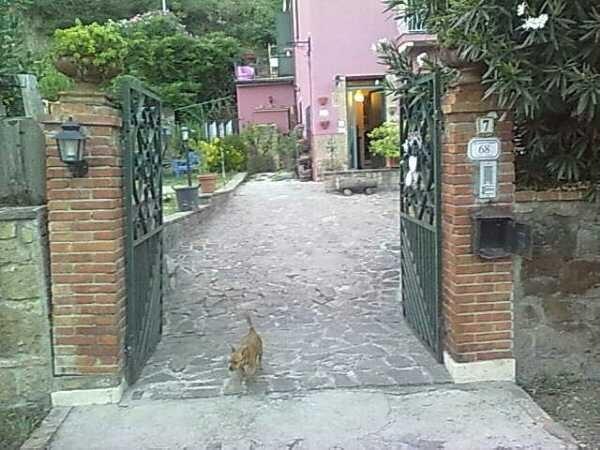 Il cane da guardia