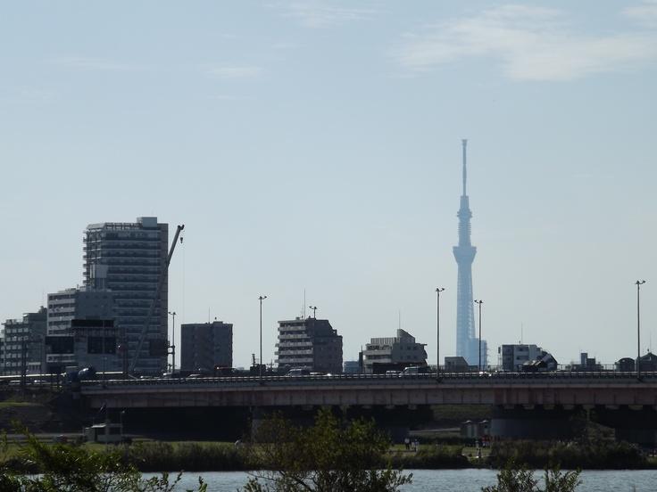 Tokyo Sky Tree. Oct.13.2012. at The bank of Edogawa River, Ichikawa, Chiba, Japan
