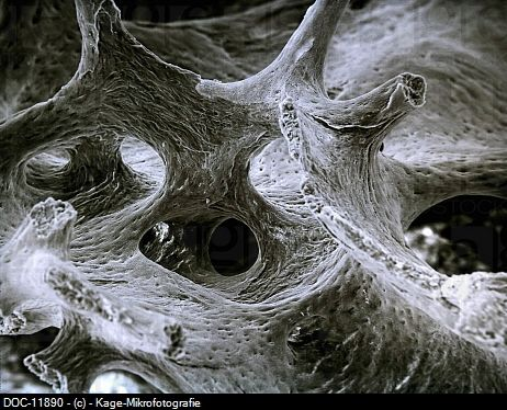 25+ best ideas about Electron microscope on Pinterest ...