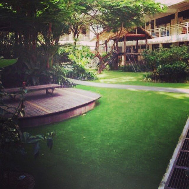 Walker's Gardening Tip: By using Royal Grass, a high quality artificial turf, kids can play in the garden even during the long rainy days. It is perfect for kids: safe, soft and looks natural. Attached photo shows Royal Grass installed at Uplands School in Penang. Interested to know more about this stylish and durable product? Contact us at+6042274271/72 or email info@walkerlandscape.com.my #walkerlandscape #royalgrass #artificialgrass #artificialturf #gardening #garden #playground…