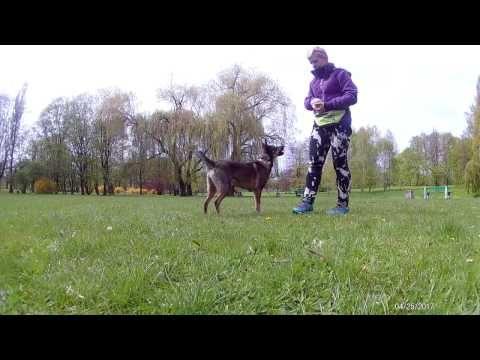 test na osobowość psa - zestaw pytań do oceny charakteru psów http://szkolenie-psow-doberman.blogspot.com/2017/06/test-na-osobowosc-psa-ocena-charakteru.html