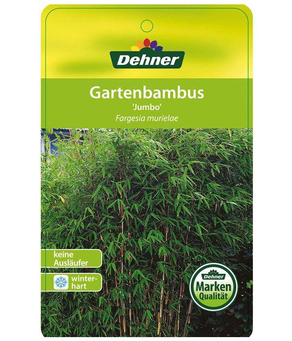Schirm Bambus Jumbo Dehner In 2020 Bambus Pflanzen Bambus Pflanzen