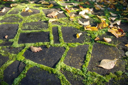 Landscaping With Irish Moss : Path with moss landscaping stone paths