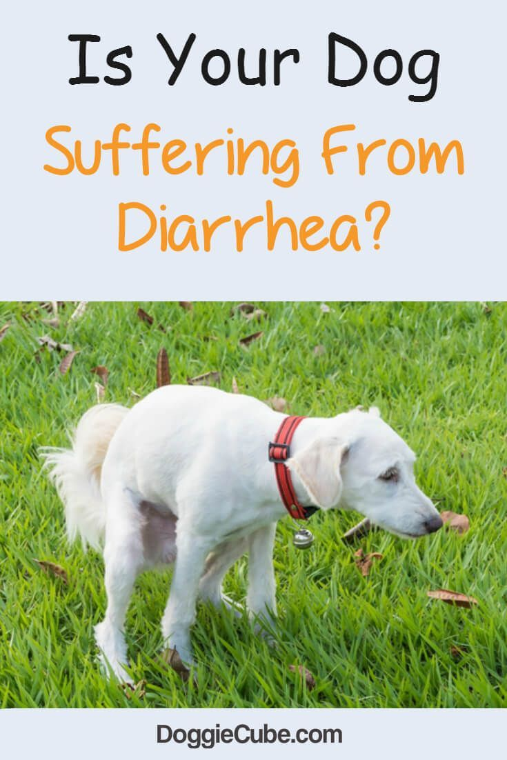 Is Your Dog Suffering From Diarrhea Diarrhea In Dogs Dog Has