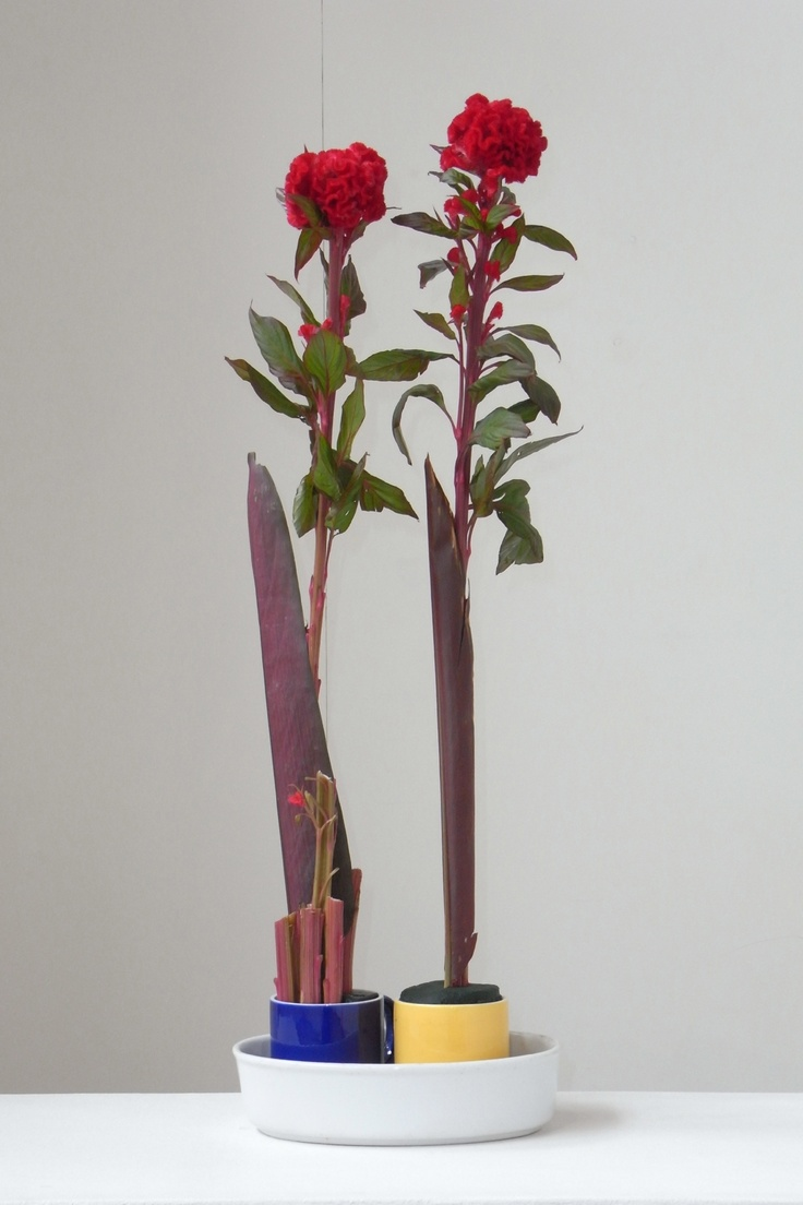 A floral arrangement incorporating Celosia cristata [Celosia in Greek means burning] is a member of the genus Celosia, and is commonly known as cockscomb, since the flower looks like the head on a rooster (cock).