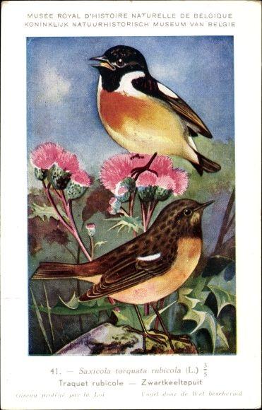 Künstler Ansichtskarte / Postkarte Dupond, Hubert, Saxicola torquata, Schwarzkehlchen, Disteln