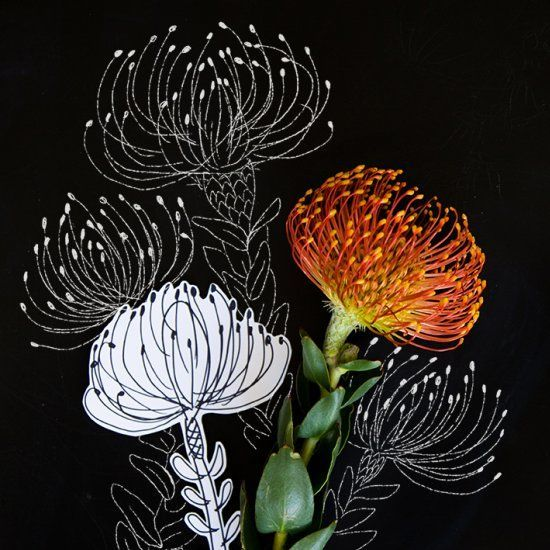 Draw a pincushion protea