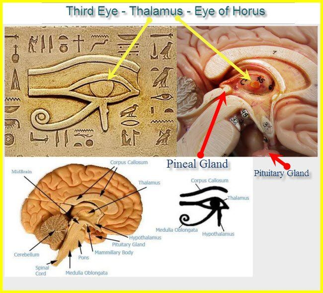 Eines der bestgehüteten Geheimnisse der Menschheit: Die Zirbeldrüse – Das Dritte Auge – Das Auge des Horus