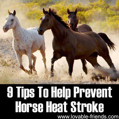 http://www.pinterest.com/wtibbit/horses/ ZILLION HORSES 9 Tips To Help Prevent Horse Heat Stroke