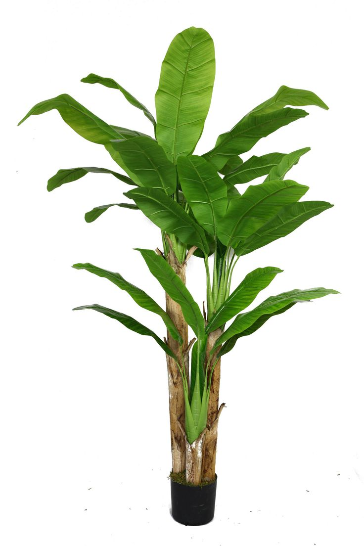 Features with real touch leaves no need to shop for a for Artificial banana leaves decoration