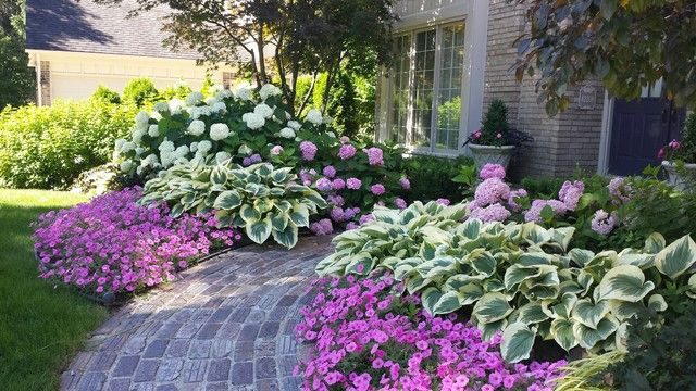 Incrediball hydrangea with liberty hosta