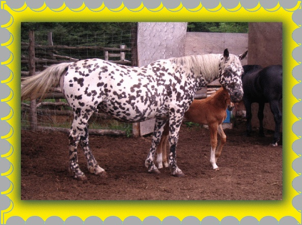 17 Best images about Interesting Horse Colors on Pinterest ...