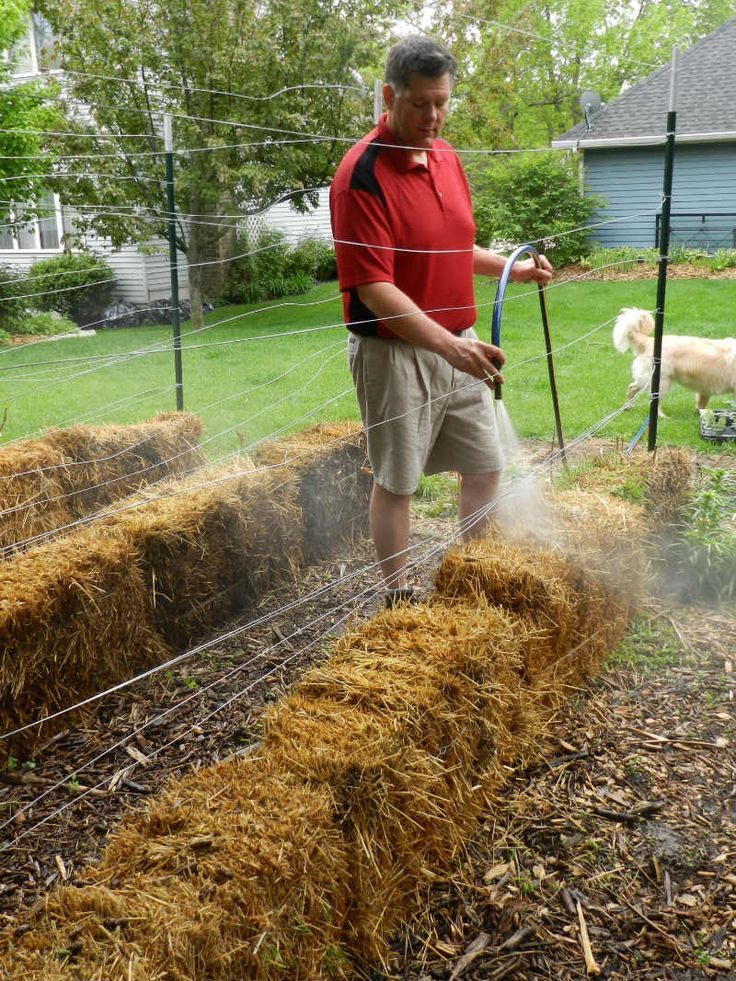 How to build a straw bale garden, this site has more information... I did it this year and I'm amazed at the size of my tomatoes! I put them around my Rhubarb patches and I was harvesting rhubarb into late September! Give this a try