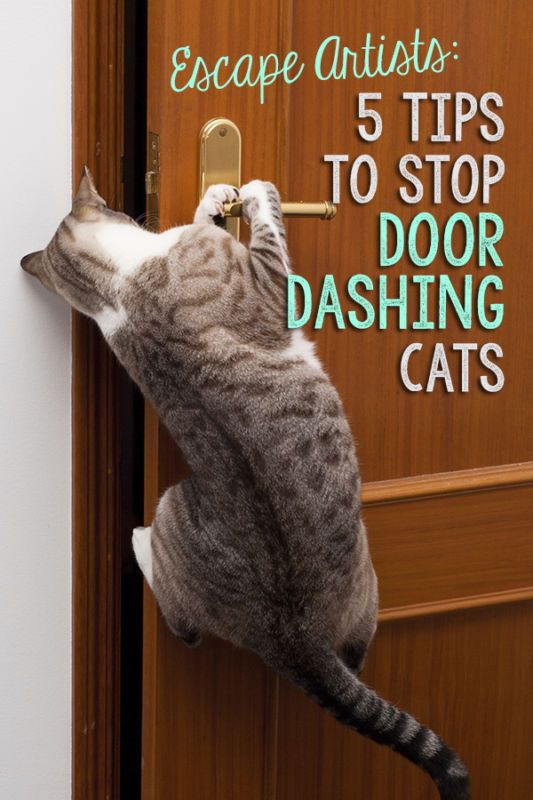 The only foolproof way to protect your cat from the dangers of the outdoors is, well, to keep him indoors. And, if you've got a kitty that likes to make a run for the door every chance he gets, that can be quite a challenge. Here are some tips and tricks to stop your escape artist cat from door dashing once and for all.