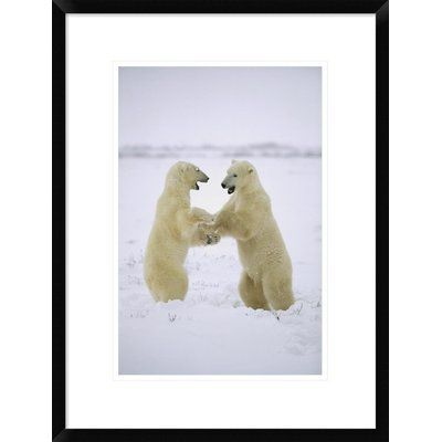"Global Gallery 'Polar Bear Two Males Play-Fighting' Framed Photographic Print Size: 24"" H x 18"" W x 1.5"" D"