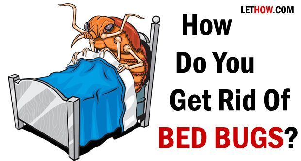 What Do To Get Rid Of Bed Bugs
