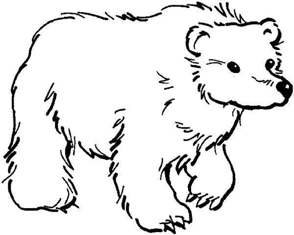 Winter Animal Polar Bear Coloring Pages