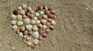 Сердце, Моллюски, Гармония, Любовь