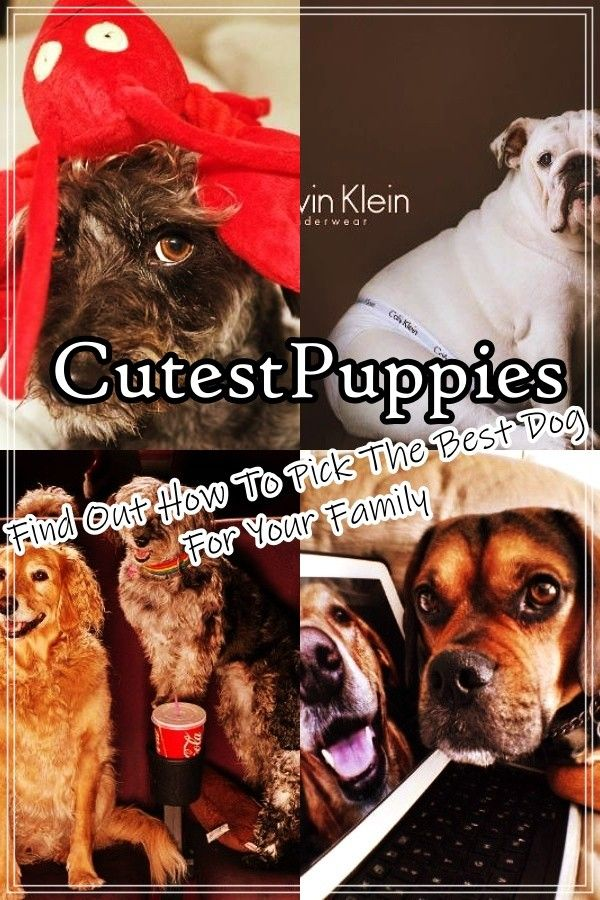 What To Do When You Bring Home A Puppy Puppy Find Cute Puppies Puppies