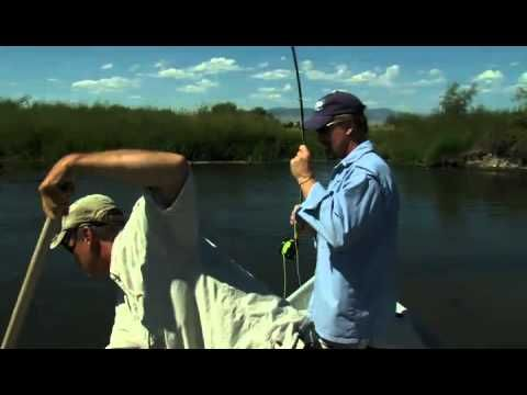 ▶ BROWN TROUT ON HOPPERS FLYFISHTV - YouTube