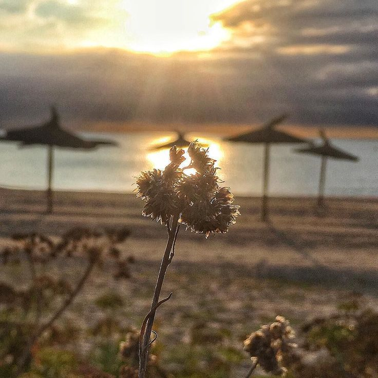 Flower at beach. #clouds #luis_jardi  #luisjardi #freesound #sfxcentral #sea #seawaves #storm  #cubase #logicaudio