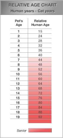 Akaal Pet Hospital cat age chart. I'm pretty sure this applies mostly to dogs...?