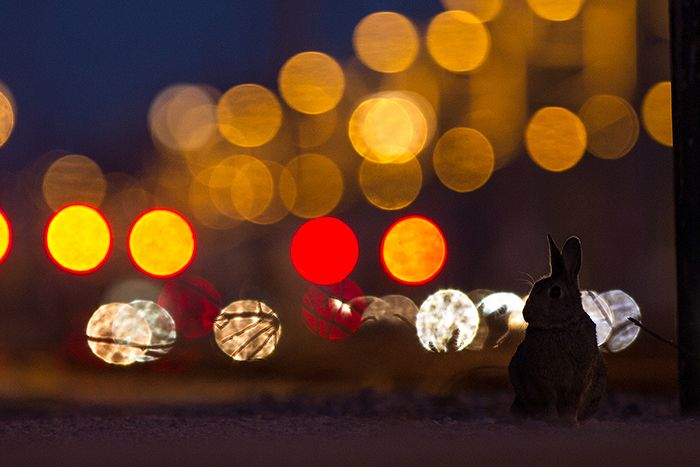 Among rabbits - the latest photoadventures for WIENER WILDNIS