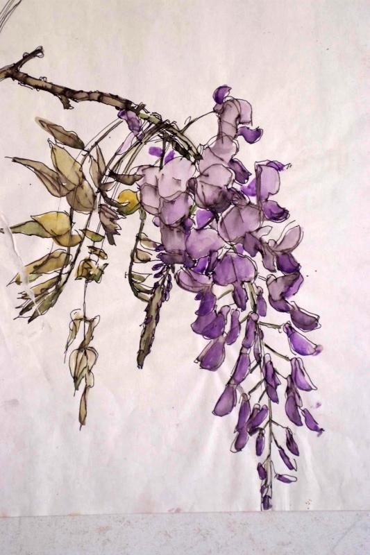 botanical illustrations wisteria - Sök på Google