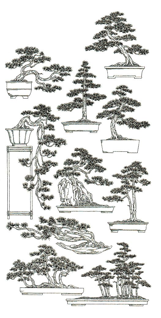 Shape & styles of bonsai tree