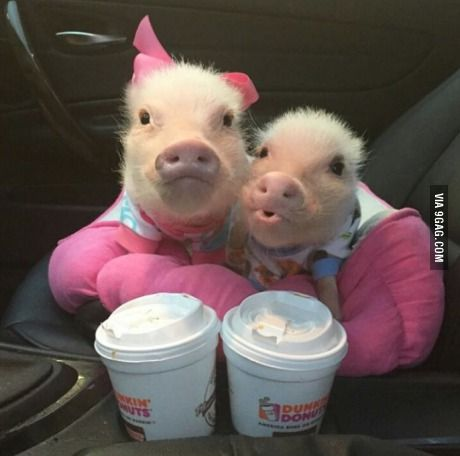 This morning's breakfast - pigs in a blanket and some coffee.
