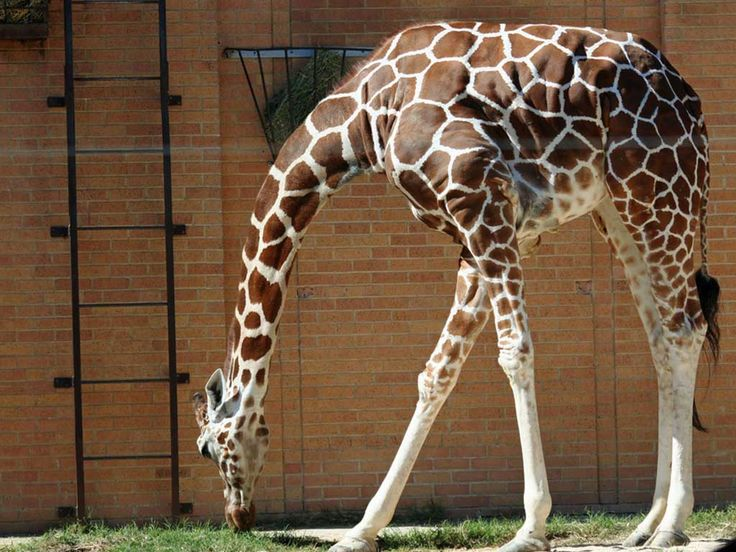 Dallas Zoo : Abandoned Places to See Now : TravelChannel.com