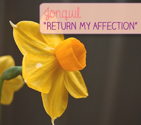 Jonquil: Return My Affection   The Language of Flowers