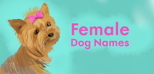 Find a list of cool female dog names for your new furry friend.