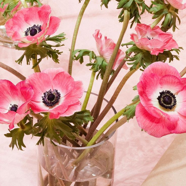 U201cI Must Have Flowers, Always, And Always.u201d U2015 Claude Monet