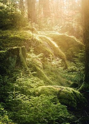 Lush green forest in golden sunlight. Available as poster at printler.com, the marketplace for photo art.