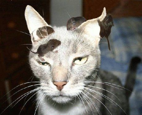 That be one Crazy Cat!