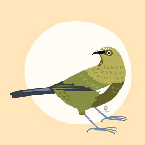 Giselle Clarkson Illustration - Birds