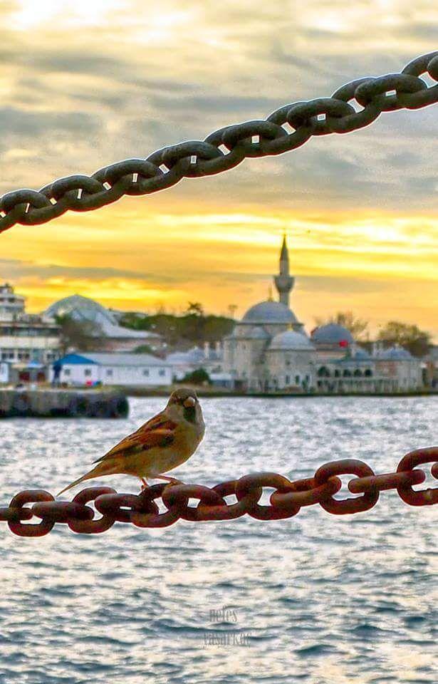 Şemsi Ahmet paşa camii (Şemsipaşa) Üsküdar İstanbul.