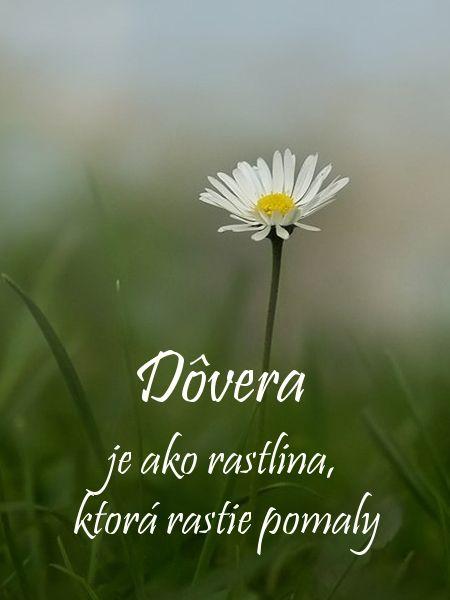 Dôvera  je ako rastlina,  ktorá rastie pomaly