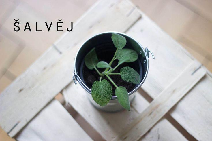 Velký bylinkový průvodce aneb co pěstovat na balkóně