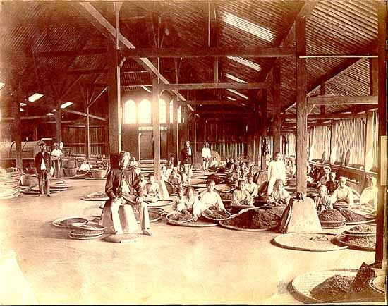 Tea factory interior. Preanger, Java, mid-1860s. Albumen silver print.